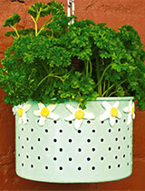 Create tin can plant pots to hang on your fence