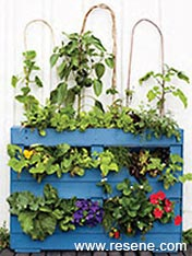An edible garden can be grown in a wooden pallet
